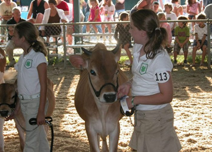 Girls Presenting Calves | 4H Show