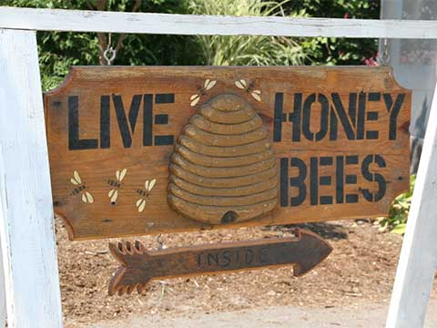 Live Honey Bees Sign | Beekeeping - Daily Entertainment