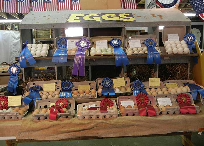 Eggs Display | Agriculture Exhibitor Information