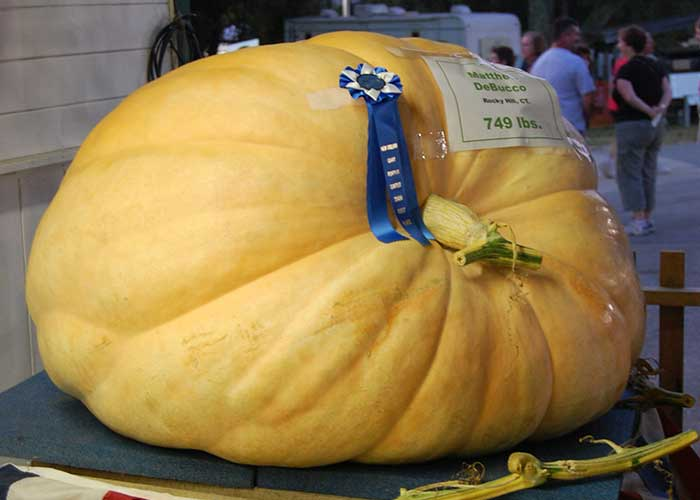 Giant Pumpkin   Agriculture Exhibitor Information
