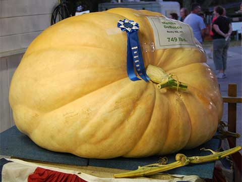 Giant Pumpkin | Daily Entertainment
