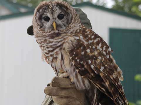 Owl Perched on a Man's Hand | Raptors | Daily Entertainment