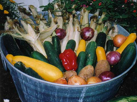 Vegetable Display in a Bucket | Daily Entertainment